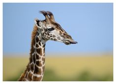 Two New Print Releases | David Lloyd Wildlife Photography