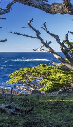The ultimate guide to Big Sur's Point Lobos State Reserve on Roadtrippers