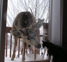 Cat:oh look it's a deer!Deer::-: oh dear