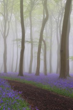 Bluebells, Oxfordshire, England photo by ceri