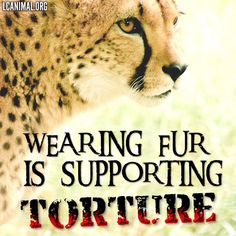 Don't Support Torture