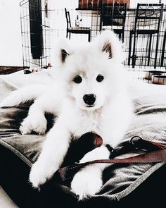 Dogs 🐶 - Cute Dogs, Dog cat and Doggies. Cute Little Animals, Cute Funny Animals, Funny Pets, Funny Husky, Cute Dogs And Puppies, I Love Dogs, Doggies, Cute Creatures, Animals Beautiful