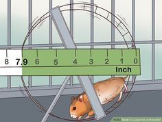 Veterinarian-Approved Advice on How to Care for a Hamster Guinea Pig Toys, Guinea Pig Care, Guinea Pigs, Reptile Cage, Reptile Enclosure, Humane Society, Bearded Dragon Vivarium, Hamster Names, Hamster Habitat
