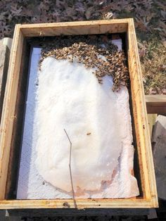 dry sugar emergency feed for honey bees Feeding Bees, Bee Hive Plans, Beekeeping For Beginners, Bee Supplies, Bee Swarm, Raising Bees, Buzz Bee, Bee Do, I Love Bees