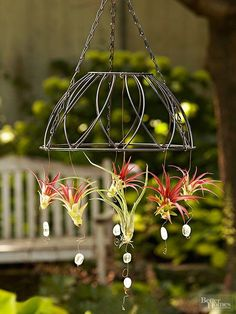 Plant Display Ideas Attach air plants to a hanging outdoor fixture to create a stunning, living focal point.Attach air plants to a hanging outdoor fixture to create a stunning, living focal point. Air Plant Display, Plant Decor, Hanging Air Plants, Indoor Plants, Indoor Herbs, Diy Hanging, Decoration Plante, Succulents Garden, Hanging Succulents