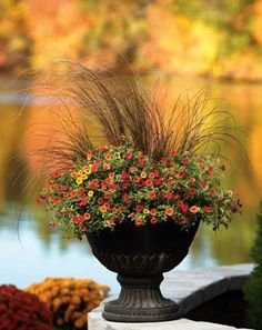 Container Garden Design - Foliage and Texture | Proven Winners