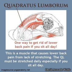 Stretching Out The Quadratus Lumborum Muscle To Get Rid Of Lower Back Pain If You Sit All Day