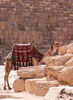 Kamila - Giza, Giza.Egypt.*-*.