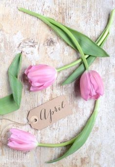 ~tulips hi April's~. Seasons Months, Days And Months, Months In A Year, New Month Wishes, April Quotes, Décor Boho, Pink Tulips, Spring Has Sprung, Hello Spring