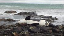 Washed up whale 'most contaminated' on record