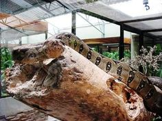 At the Serpantarium, you can view over 40 species of both poisonous and non-poisonous snakes, reptiles, frogs, lizards, iguanas, other amphibians, and some turtles. #costarica | monteverdetours.com