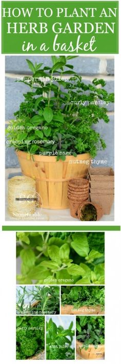 How to Plant a Kitchen Herb Garden in a Basket - It's always a good time to start growing fresh herbs indoors!