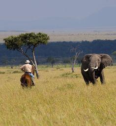 Safari à cheval dans la réserve Masaï Mara au Kenya avec Cheval d'Aventure #Afrique #safari