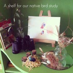 native bird study - An Everyday Story
