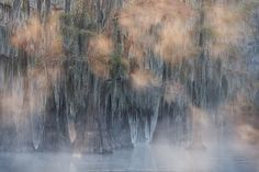 """Cypress In Fog"" - David Chauvin Photography...gorgeous!"
