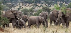Action Network - Elephants Action Network | Clinton Foundation