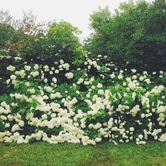 Find Momo in the flower garden. #findmomo  (at Wendys Desk)