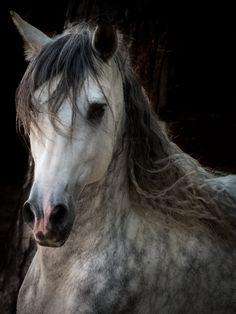 Michelle Juhl & ukendt hest photo collection by Juhl's foto