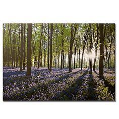 Graham u0026 Brown Bluebell Fields Landscape Canvas Wall Art  sc 1 st  Pinterest & Get Pastel Birch Trees Framed Art online or find other Wall Art ...