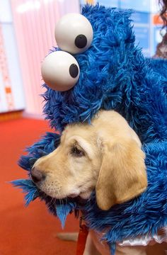 If any of you are feeling down, here's Cookie Monster hugging a puppy