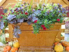 potted plants that'll live through winter