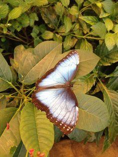 Butterfly - photo by Patrick Mack