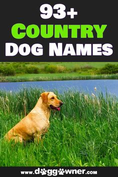 These charming country dog names are going to fit your new puppy perfectly. And here are 93+ names for you to look through and find the one that is the best for you. #countrydognames #dognames