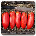 Organic Gilbertie Paste Tomato