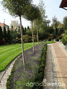 Na zielonej... trawce :) - strona 7 - Forum ogrodnicze - Ogrodowisko