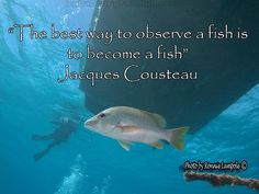 Hay otros peces en el mar , pero siempre será mi Nemo There are other fish in the Sea but you will always be my Nemo Scuba Diving Quotes, Jacques Cousteau, Ocean Deep, Life Aquatic, Underwater Life, Marine Biology, Snorkelling, Sea Fish, Marine Life