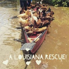 Floods of 2016 ~ keep them in your prayers