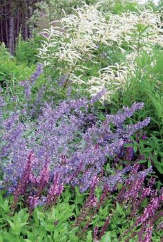 Discover eight perennial plant combinations that will attract butterflies and other pollinators to your garden. Butterfly-friendly plants include salvia, agastache, monarda, coneflower and milkweed.
