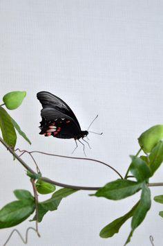 "ChristineHollinshead on Twitter: ""Beautiful day at #sensationalbutterflies @NHM_London :) http://t.co/CpstxSXSGI"""