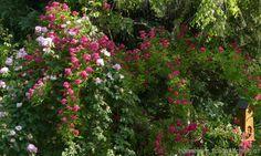 Blumenböschung und Lusthaus | Mein Garten