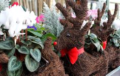 Floral Reindeer Displays Great Christmas Gifts, Great Gifts, Reindeer, Deck, Wreaths, Gift Ideas, Make It Yourself, Fall, Floral