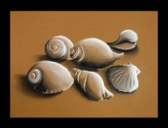 Students started with contour drawing exercises. Next they were given the task of shading basic forms. Finally, using their five best shell drawings drawn from observation, students created their final shaded drawings.