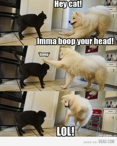 This is what goes on in my house everyday.  Except it's the cat boppin' the giant dog in the head