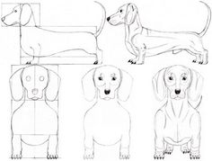 Google Afbeeldingen resultaat voor http://www.discover-how-to-draw.com/image-files/how-to-draw-a-dog-dachshund-00.jpg