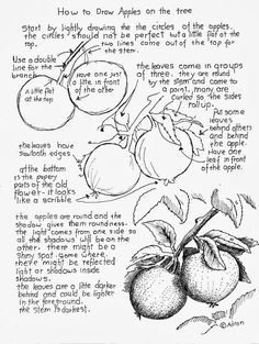 How to Draw Worksheets for The Young Artist: How to Draw Apples on the Tree Worksheet.
