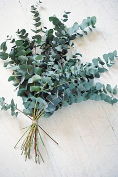 Eucalyptus bouquet for the bridesmaids, but probably about 1/2 this size, with a gray/ivory accent and the long green bow.