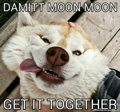 Moon moon the retarded wolf....damitt moon moom get it toghether. Never gets old