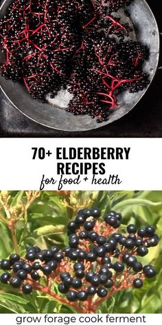 Elderberry Recipes & Remedies for Food & Health no secret that elderberries are a superfood with many undisputed health benefits! These tasty elderberry recipes will leave you with tons of ideas of how to use these immune-boosting wild berries Elderberry Jelly Recipe, Elderberry Recipes, Elderberry Syrup, Elderberry Uses, Elderberry Benefits, Elderberry Powder, Elderberry Plant, Jelly Recipes, Raw Food Recipes