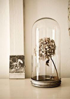 Fleur séchée sous cloche - Marie Claire Maison