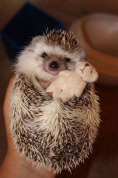 adorable hedgehog holding its tiny teddy bear