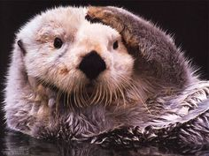you otter know <3