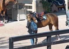 Help your horse settle in at a show!  Easy tips.   http://www.proequinegrooms.com/index.php/tips/barn-management/settling-in-at-a-horse-show/