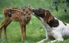 <3 natures odd couple