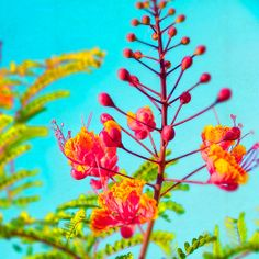 Hawaii Photography Tropical Floral Botanical by KaleidoscopePhoto, $15.00