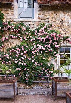 The pink garden💕 Garden Gates, Balcony Garden, Garden Plants, Back Gardens, Outdoor Gardens, Beautiful Gardens, Beautiful Flowers, Heritage Rose, Farmhouse Garden