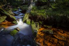 the Oder in the Harz National Park, Germany #Harz